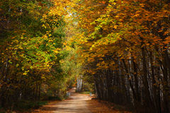 Route de campagne en bois d'automne. Photos stock