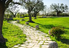 Route de campagne entourée par la pelouse et les arbres Photos stock