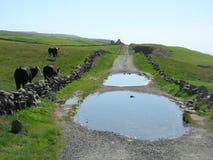 Route de campagne irlandaise Images libres de droits