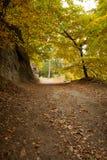 Route de campagne le long des arbres dans la forêt luxuriante Photos libres de droits