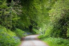 Route de campagne menant par la forêt luxuriante en Irlande Photographie stock libre de droits