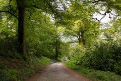 Route de campagne menant par la forêt luxuriante en Irlande Images libres de droits