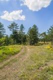 Route de campagne par le pré et les pins Images stock