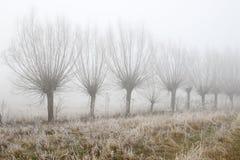 Route de campagne parmi des saules en brume de matin Photos stock