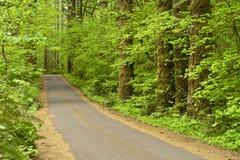 Route de campagne rayée par arbre Image libre de droits