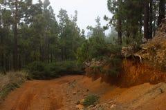 Route de campagne de Sandy dans un bois Ouvrez la voie en au sol conifére de rouge de forêt Ténérife Photographie stock libre de droits