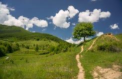 Route de chemin menant à un arbre Images libres de droits