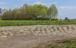 Route de Cobbelstone Image libre de droits