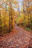 Route de couleur d'automne avec complètement du couvert de lames Image stock
