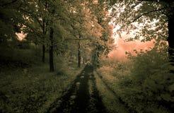 Route de crépuscule d'été Photographie stock