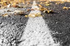 Route de feuilles d'automne Images libres de droits