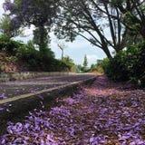 Route de fleur Photos libres de droits