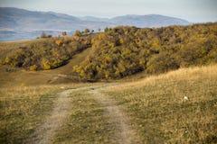 Route de Forrest à la chute Photo stock