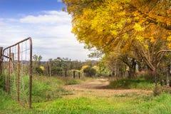 Route de gravier sundappled par automne avec la porte ouverte Images stock