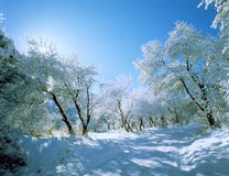 Route de l'hiver après des chutes de neige   photographie stock libre de droits