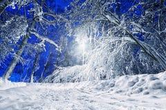 Route de l'hiver avec le réverbère la nuit Photo stock