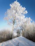 Route de l'hiver avec les arbres givrés et le givre Image stock