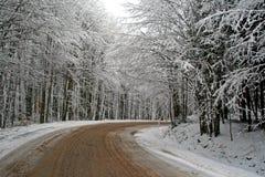 Route de l'hiver dans la forêt Images libres de droits
