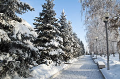 Route de l'hiver en stationnement. Photographie stock