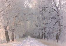 Route de l'hiver Paysage lithuanien photographie stock libre de droits