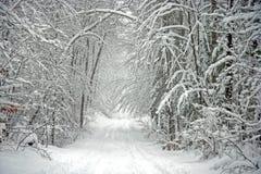Route de l'hiver rayée par arbre scénique photographie stock libre de droits