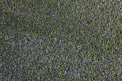 Route de la miette en pierre, envahie avec de la mousse Images stock