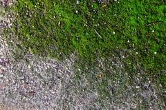 Route de la miette en pierre, envahie avec de la mousse Photo libre de droits