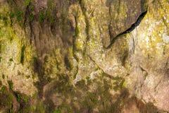 Route de la miette en pierre, envahie avec de la mousse Images libres de droits