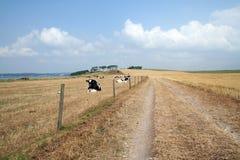 Route de la poussière de vache Images stock