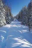 Route de Milou dans la forêt Image stock