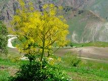 Route de montagne Photos stock
