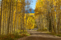 Route de montagne dans Aspen Grove d'or Photo stock