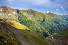Route de montagne de Transfagarasan avec les fleurs sauvages de Roumanie Images stock