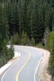 Route de montagne encadrée avec des arbres de pin Images libres de droits