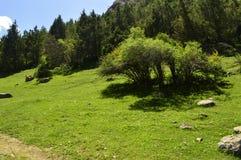 Route de montagne, gorge de Galuyan, Kirghizistan Images stock