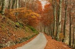 Route de Paceful par la forêt colorée d'automne Photos stock