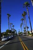 Route de palmier Image stock