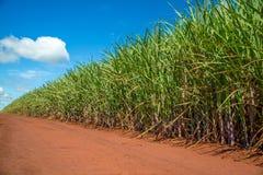 Route de plantation de canne à sucre Photo stock