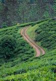 Route de plantation de thé image stock