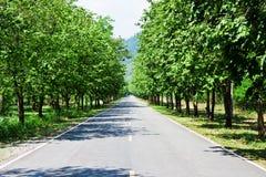 Route de point de vue Image libre de droits