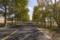 Route de prairie Images stock