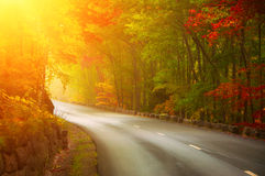 Route de recourbement dans la forêt ensoleillée d'automne Image stock
