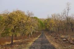 Route de safari, Tadoba Tiger Reserve, maharashtra, Inde photographie stock libre de droits