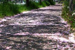 Route de Sakura Images stock