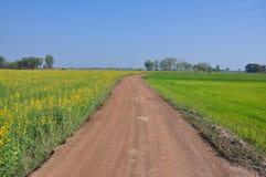 Route de sol Photo stock