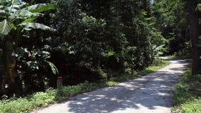Route de terre avec le signe jaune et de rouge dans la forêt sous le ciel bleu banque de vidéos