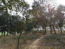 Route de village sous l'arbre photographie stock
