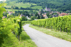 Route de wine Royalty Free Stock Image