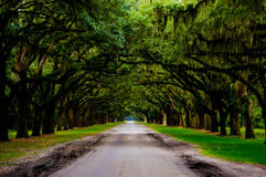 Route de Wormsloe Photographie stock