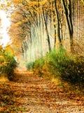 Route de zone le long de la forêt brumeuse d'automne Image stock